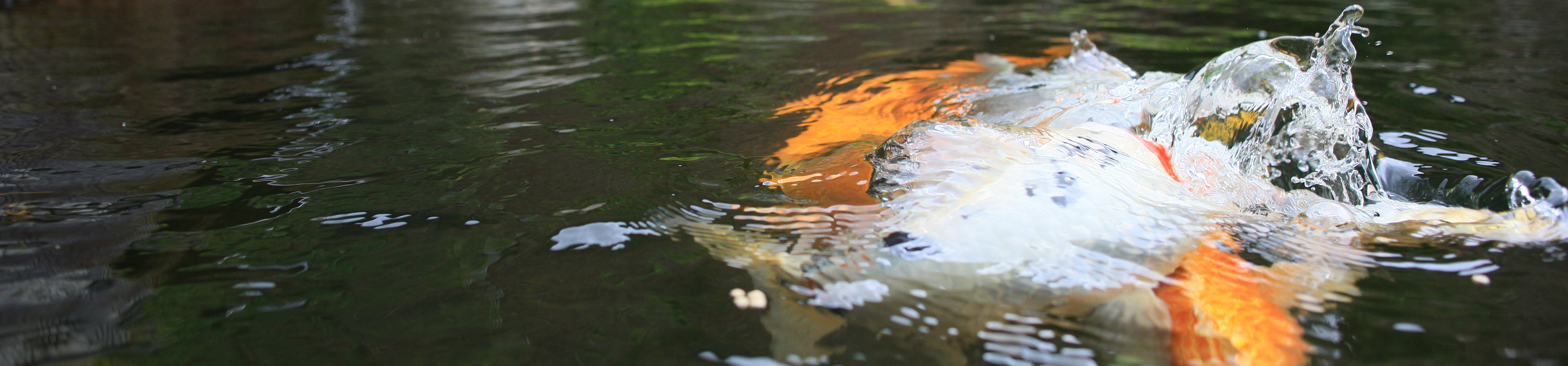 водоем с рыбой