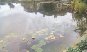 растения в пруду